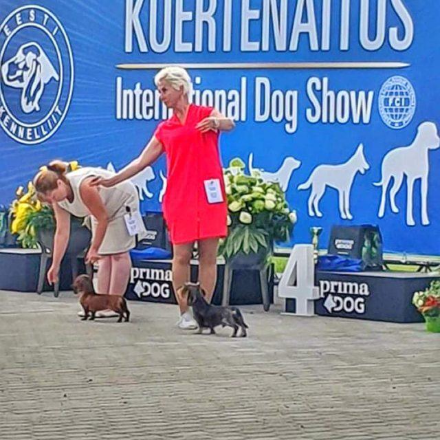 "15.08.2020 International Dog Show ""Tallinn Winner 20"""